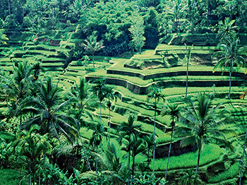 Voyage Entre Nous Escapade indonésienne de Java à Bali